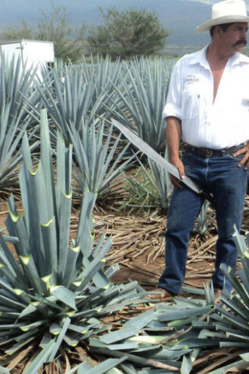 what is mescal
